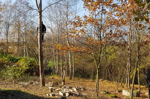 Medžio pjovimas